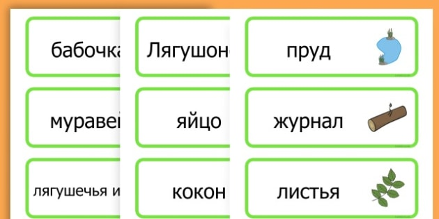 Life Cycle Word Cards - life cycles, lifecycle, visual aid, words - Russian