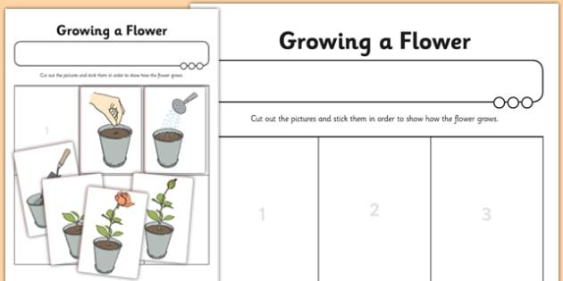 Activity Sheet Growing a Flower - activity sheet, growing, flower, worksheet