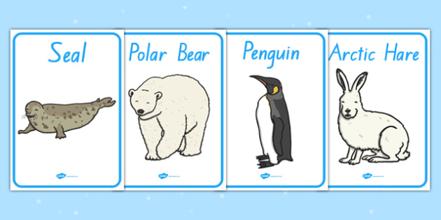Polar Regions Animals Display Posters