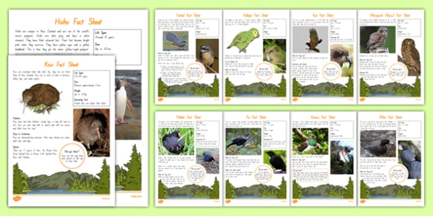 New Zealand Native Birds Fact File - nz, new zealand, Native birds, animals