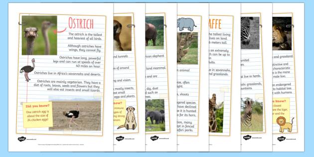 Safari Animal Fact FileDisplay Posters - safari, on safari, safari animal factfiles, safari animals, safari animals information, safari animal posters