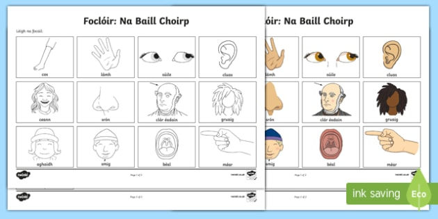 Parts of the Body Vocabulary Activity Sheet Gaeilge