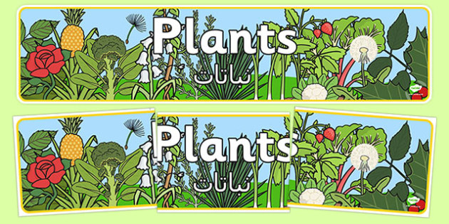 Plants Display Banner Arabic Translation - arabic, plants, plant, display banner, banner