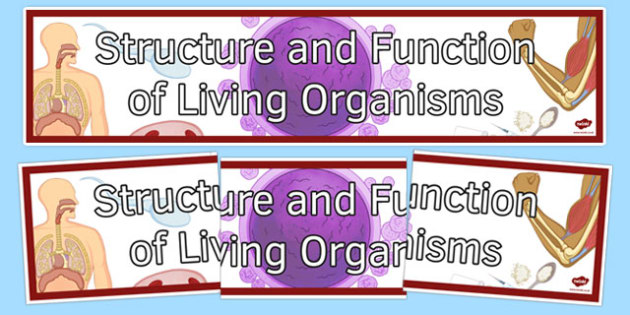 Structure and Function of Living Organisms Display Banner - structure and function of living organisms, organisms, structure, function, display banner, display, banner