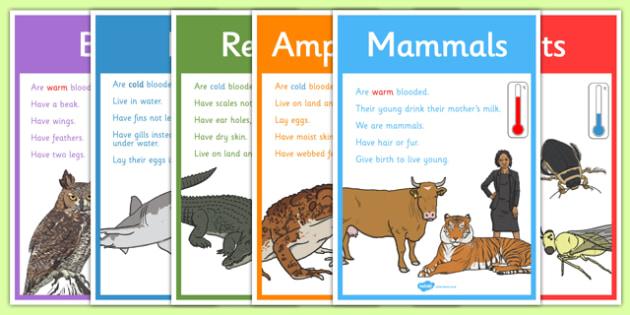 Animal Groups Display Posters - Animal, Display, Display Poster, Poster, Animal Poster, Animal Display, Animal Groups Poster, Animal Groups