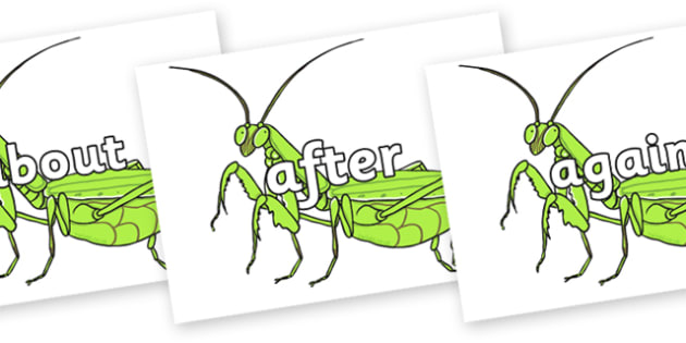 KS1 Keywords on Praying Mantis - KS1, CLL, Communication language and literacy, Display, Key words, high frequency words, foundation stage literacy, DfES Letters and Sounds, Letters and Sounds, spelling