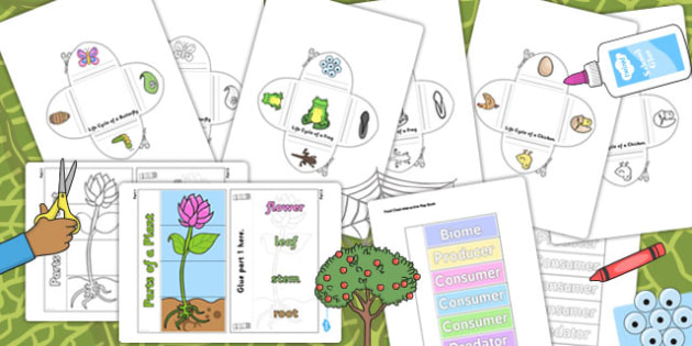 Science Lifecycles Interactive Visual Aids Resource Pack - life