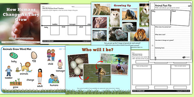 Animal and Humans Growing PowerPoints and Activities Teaching