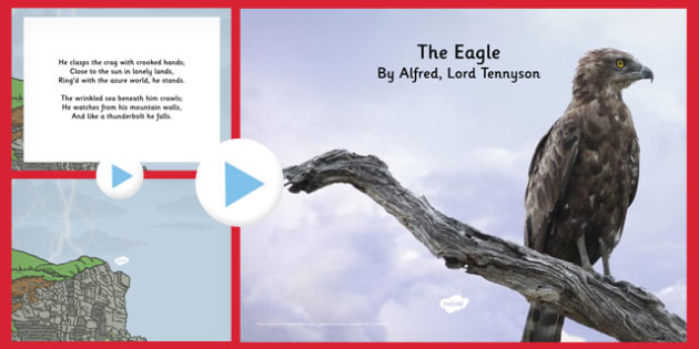 The Eagle' by Alfred Lord Tennyson Poem PowerPoint - eagle, tennyson