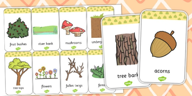 Woodland Animals Habitat Flash Cards - Woodland, Habitat, Animals