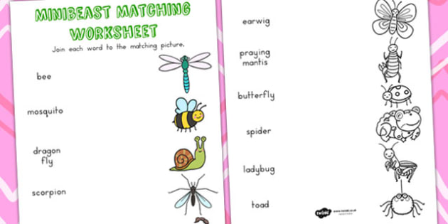 Minibeast Cute Word and Picture Matching Worksheets - order, sort