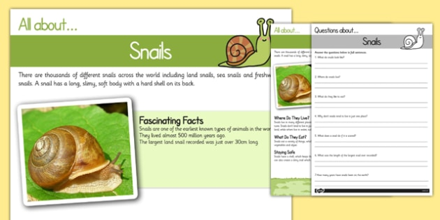 Snail Reading Comprehension - snail, reading, comprehension