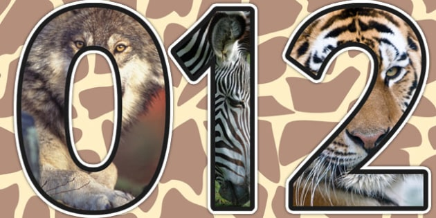 Animals Themed Photo Display Numbers - animals, numbers, display