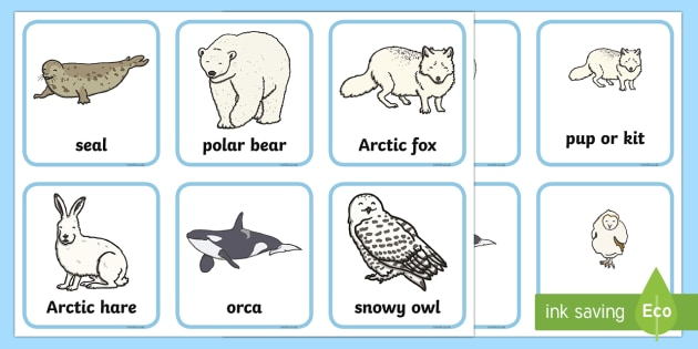 Arctic Animals and their Young Matching Cards - The Arctic, Polar Regions, north pole, south pole, explorers, seal, polar bear, owl, Arctic animals