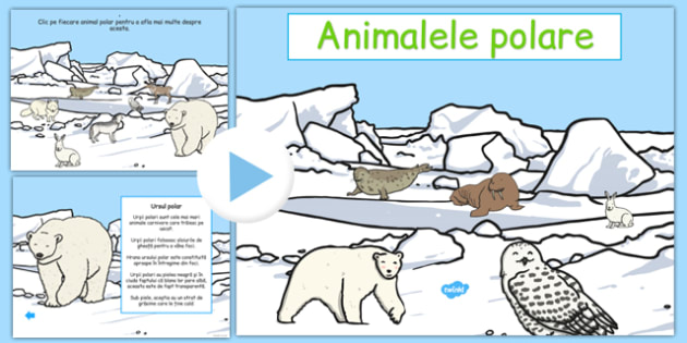 Animalele polare, Prezentare PowerPoint - descriere, habitat, alimantatie
