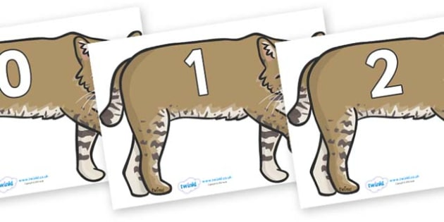 Numbers 0-50 on Bobcats - 0-50, foundation stage numeracy, Number recognition, Number flashcards, counting, number frieze, Display numbers, number posters