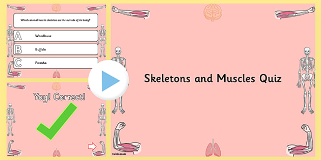 Skeletons and Muscles PowerPoint Quiz - human, muscle, body