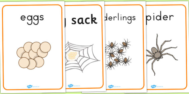 Spider Life Cycle Growth Posters - life cycle, lifecycle, display