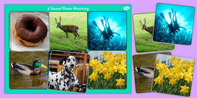 Initial d Sound Photo Matching Board and Cards - sounds, phonics