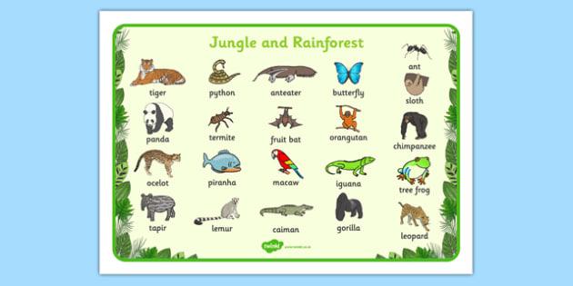 Jungle & Rainforest Word Mat - Jungle, Rainforest, word mat, writing aid, vines, A4, display, snake, forest, ecosystem, rain, humid, parrot, monkey, gorilla