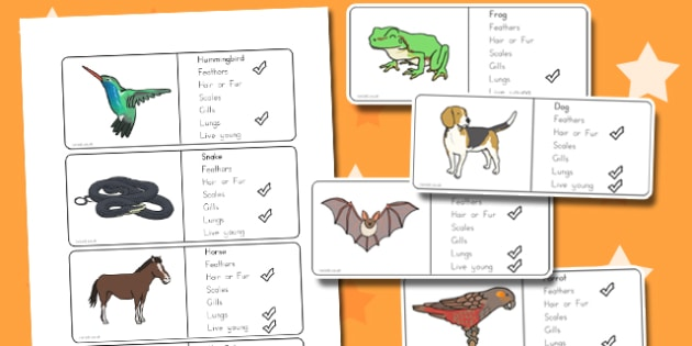 Classification of Vertebrates Cards - australia, classification, vertebrates
