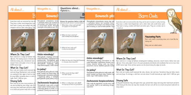 Barn Owls Reading Comprehension Polish/English