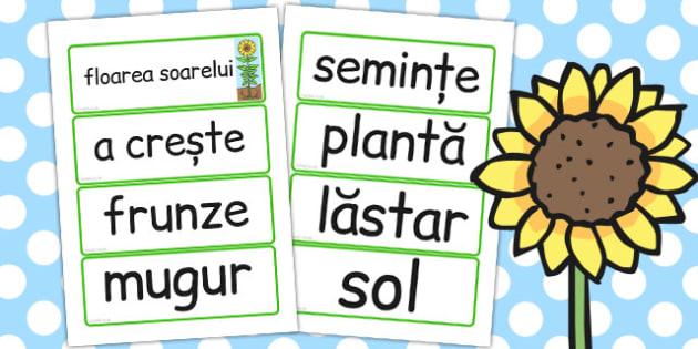 Ciclul de Viata la Floarea Soarelui, plante, cartonase, samanta, Romanian