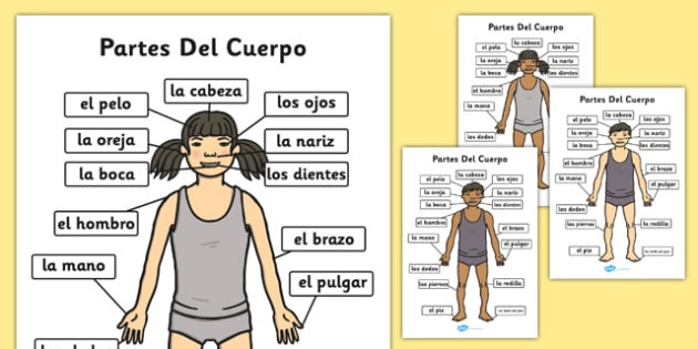 Partes Del Cuerpo A4 Spanish - spanish, parts, body, a4, body parts, parts of the body