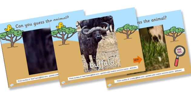 Safari Guess the Animal PowerPoint Game - safari, safari powerpoint, safari powerpoint game, safari powerpoint activity, guess the animal powerpoint