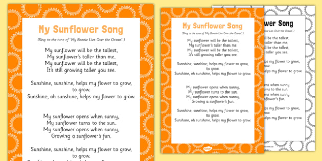 My Sunflower Song
