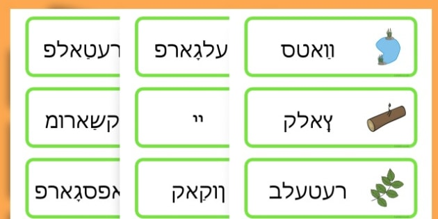 Life Cycle Word Cards - life cycles, lifecycle, visual aid, words - Yiddish