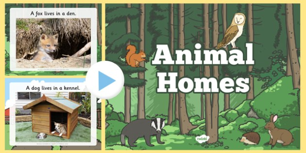 Animal Homes PowerPoint - animal homes, animal habitats, where animals live, where different animals live, habitats, environments, animals powerpoint, ks2