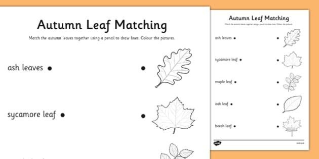 Autumn Leaves Matching Worksheet - roi, irish, republic of ireland, autumn, leaves, matching, worksheet