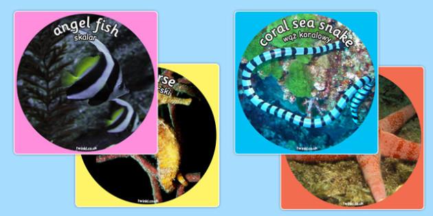 Under the Sea Themed Display Photo Cut Outs Polish Translation - polish, cutouts, photos