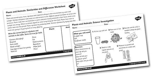 Plants and Animals Similarties and Differences and Science Investigation Worksheet - living things, plants and animals, living things worksheet, science