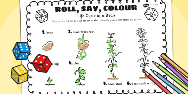 Life Cycle Of A Bean Roll Say Colour - plants, life cycle, colour