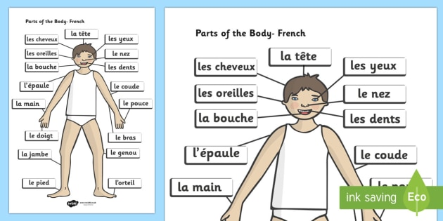 Parts of the Body A4 French Labelled Reference Sheet - france, languages, EAL, ourselves
