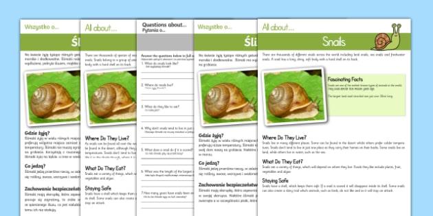 Snail Reading Comprehension English/Polish