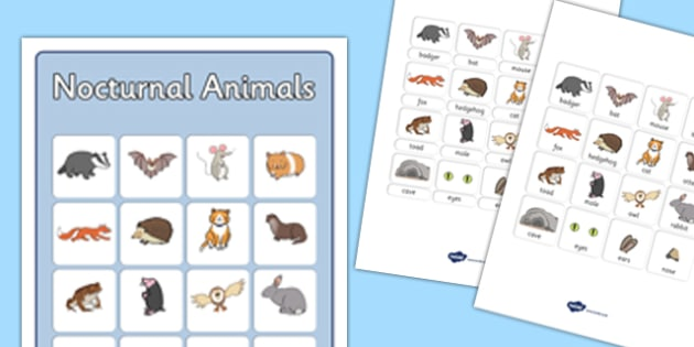 Nocturnal Animals Vocabulary Poster - nocturnal animals, vocabulary poster, display