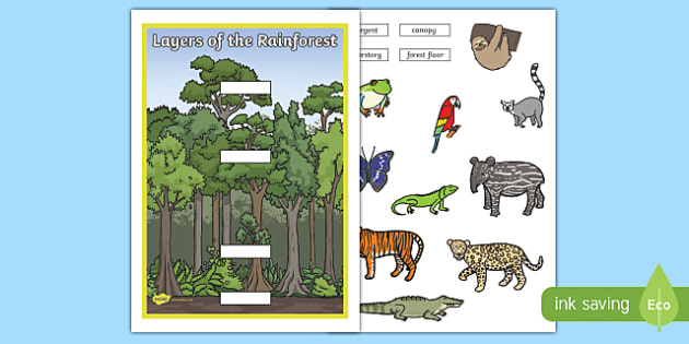 Layers of the Rainforest Cut and Stick Activity - layers, rainforest, cut and stick, activity