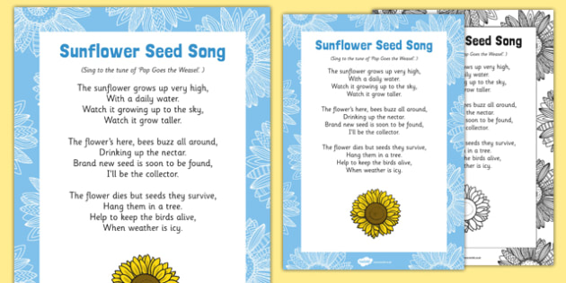 Sunflower Seed Song