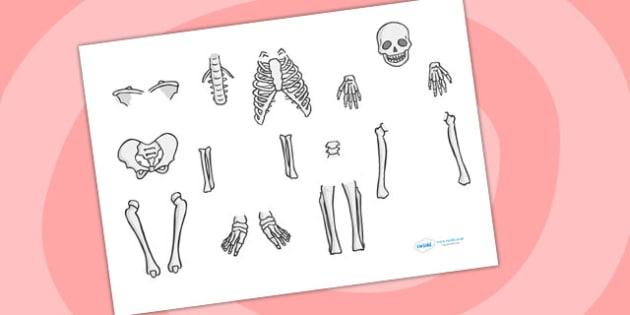 Skeleton Cut Out - skeleton, cut out, cut outs, cutting, cut outs, cut-outs, cutouts, display cutouts, images, pictures, display pictures, display images