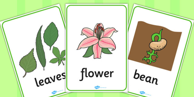 Plant and Growth Word Posters - plant, growth, word, posters