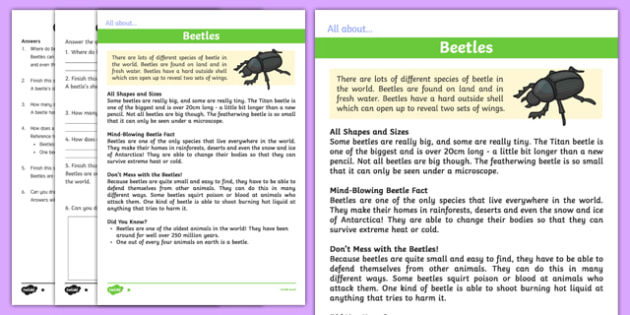 Beetles Differentiated Reading Comprehension Activity