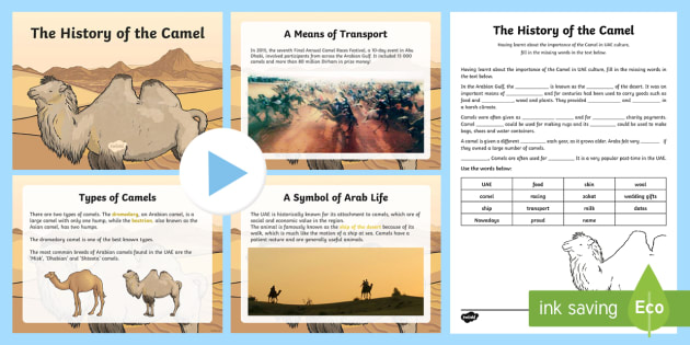 The History of the Camel Activity Pack - UAE, Culture, Heritage, Camel, Emirati, History.
