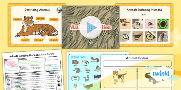 PlanIt - Science Year 1 - Animals Including Humans Lesson 5: Animal Bodies Lesson Pac