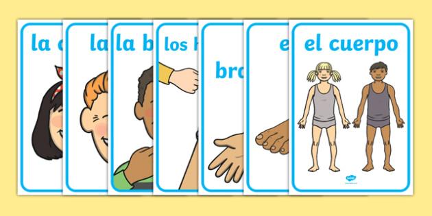 My Body Display Posters Spanish-Spanish