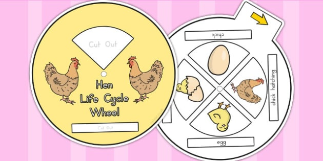 Hen Life Cycle Spin Wheel - life cycles, visual aids, lifecycles