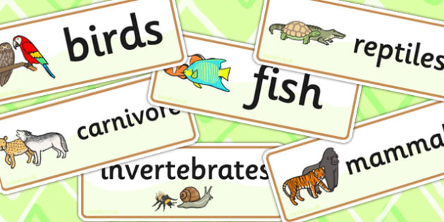 Animal Classes Word Cards - animals, classes, word cards, cards