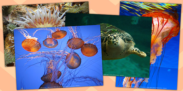 Tropical Fish Photo Pack (Under the Sea) - tropical fish, photo, pack, display